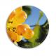 DropStop Les Saisons de la Vigne
